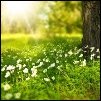 [영상] 봄이 시작되는 설레는 음악